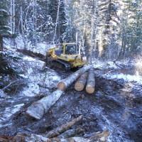 Timber Salvage & Utilization