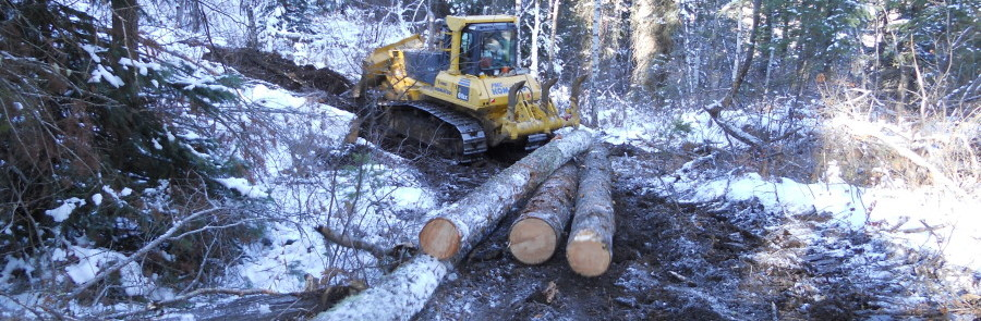 Timber Salvage and Utilization