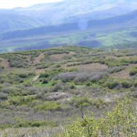 Mosaic of mountain shrub