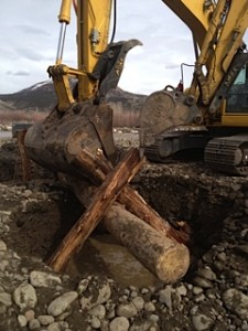 Tree Revetment used for River Project