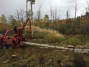 Heavy Duty Brush & Tree Removal