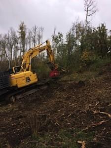 Fecon Mulching Oak Brush